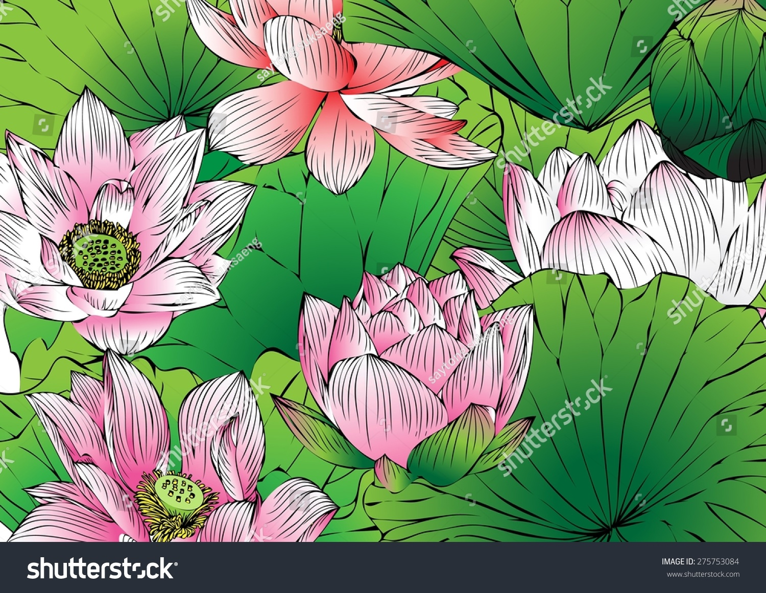 Lotus paintings vector hand drawn lotus flowers stock photo photo lotus paintingsvector of hand drawn lotus flowers and leaves sketch floral botany collection izmirmasajfo