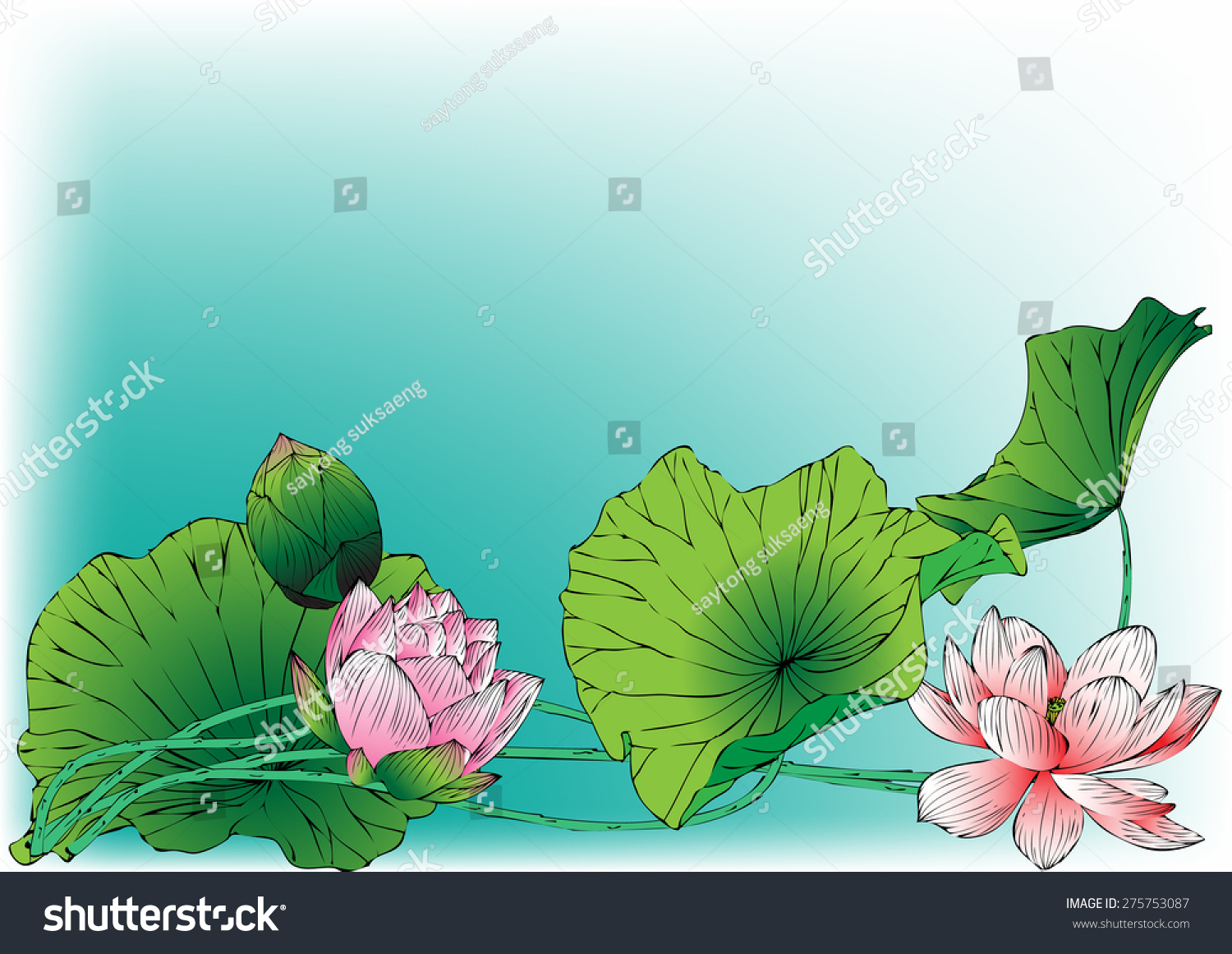 Lotus paintings vector hand drawn lotus flowers stock vector lotus paintingsvector of hand drawn lotus flowers and leaves sketch floral botany collection izmirmasajfo