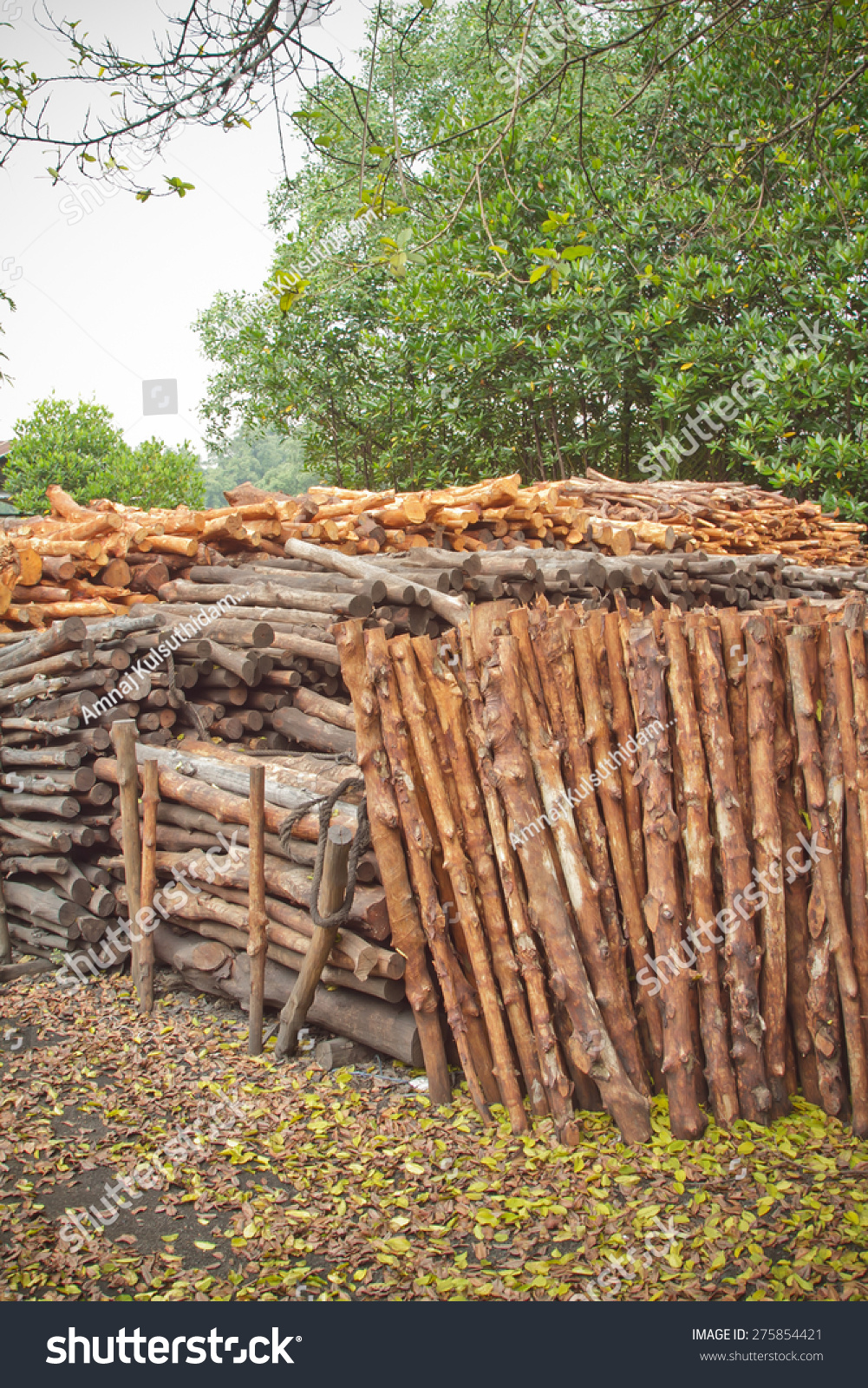 Mangrove Charcoal Industry Privatized Stock Photo (Edit Now
