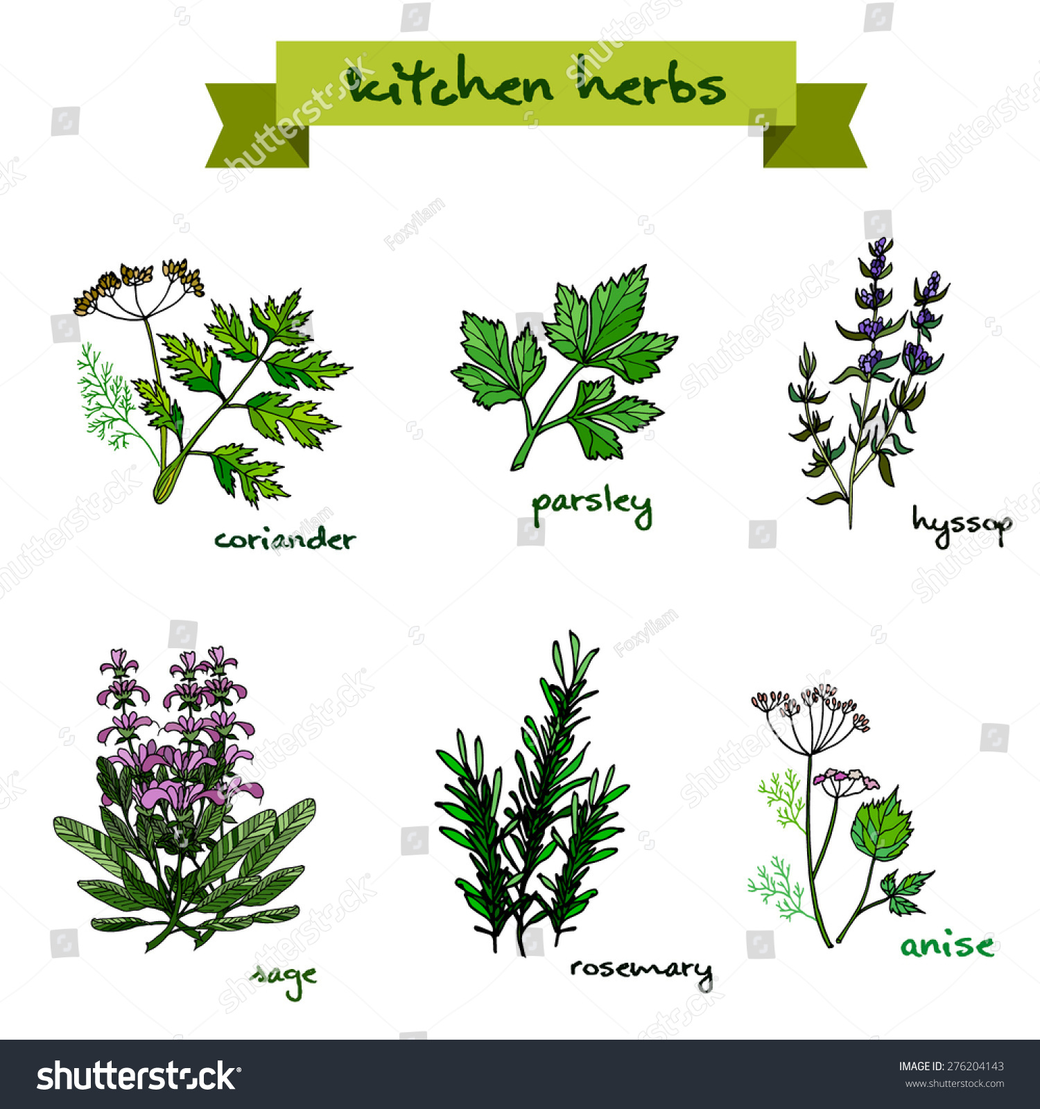 set vector handdrawn fresh kitchen herbs stock vector