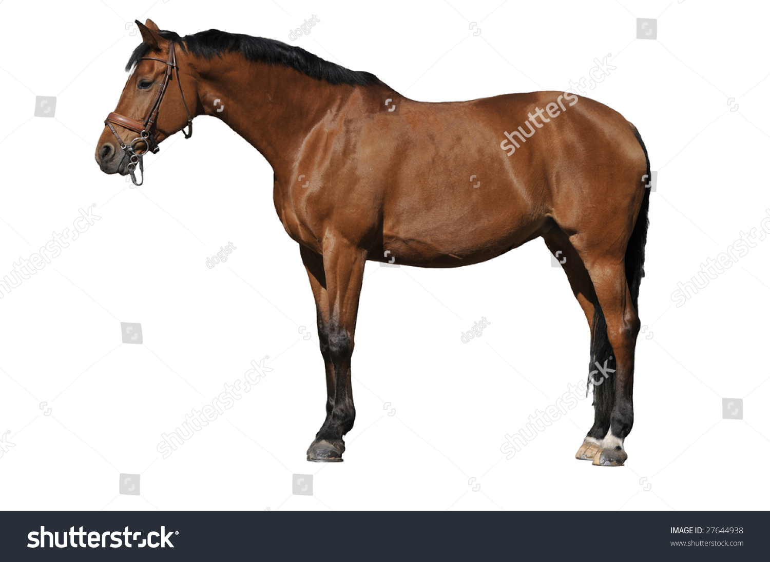 Brown Horse On White Background Stock Photo 27644938 ...