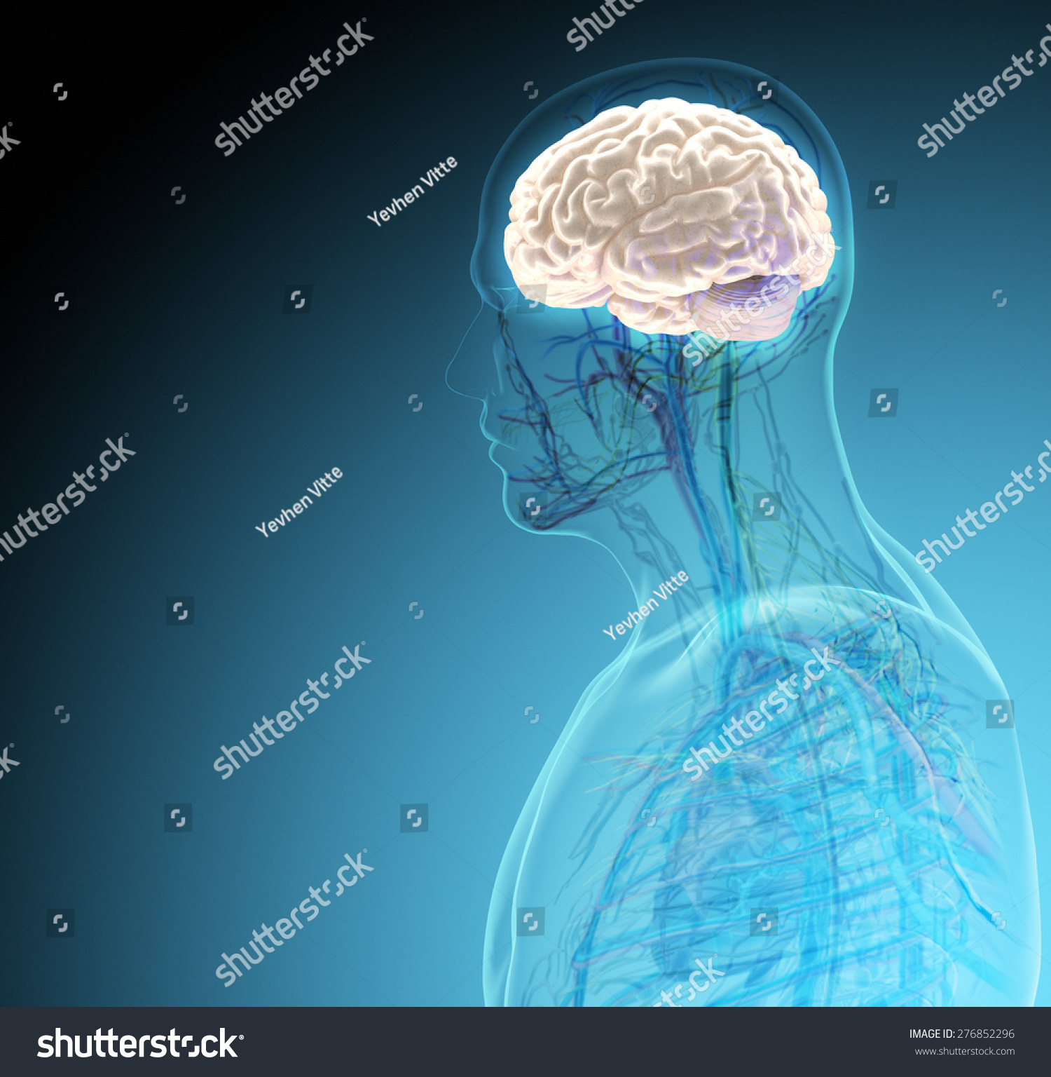 Human Body Organs By Xrays On Stock Illustration 276852296 ...