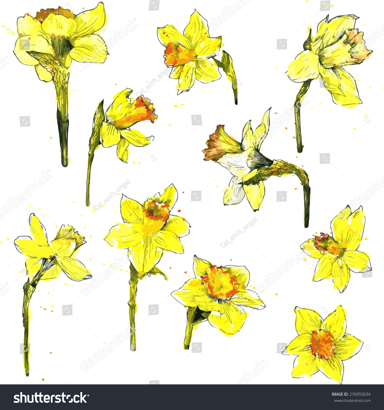 Yellow Flowers Narcissus Drawing By Watercolor Stock Photo Photo