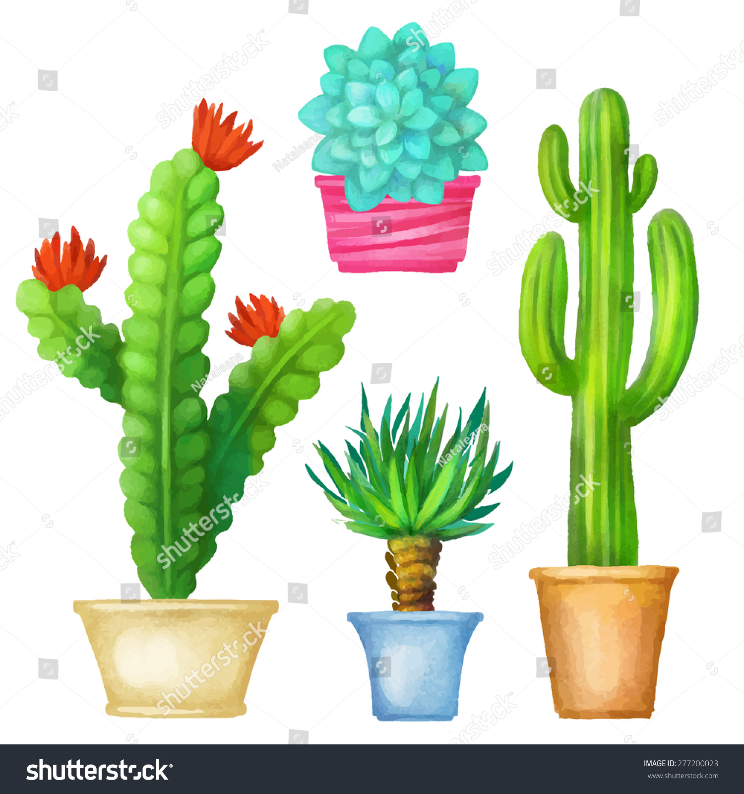 Cacti and succulents. Home Potted Flower 19