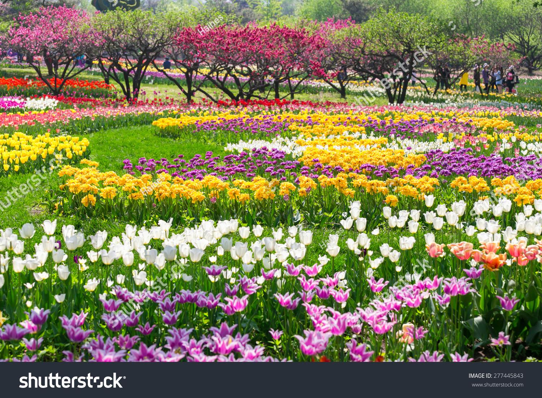 Merveilleux Beijing Botanical Garden Tulip Flowers