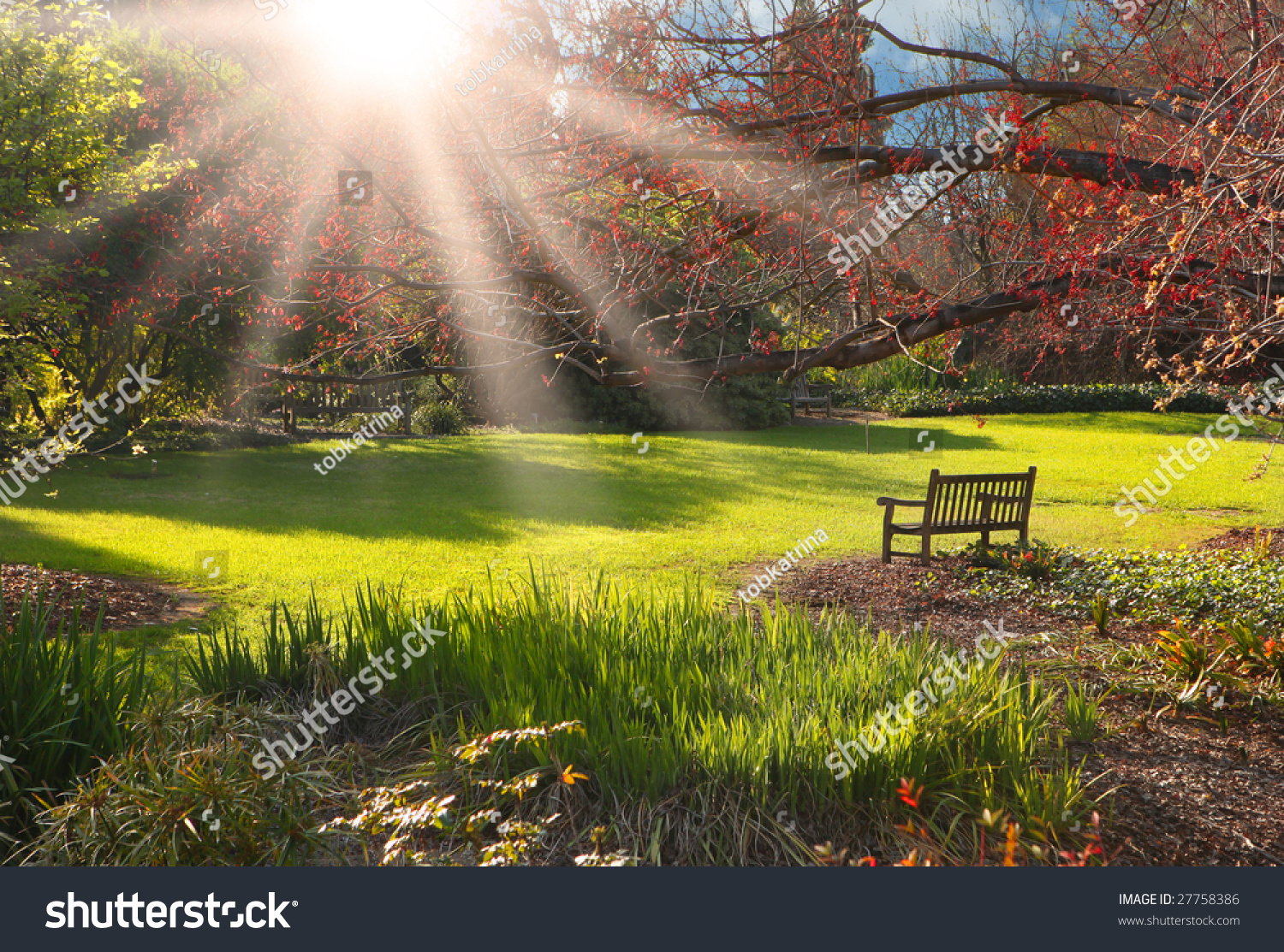 Bench In The Park At Sunset With Bright Sunlight Stock ...