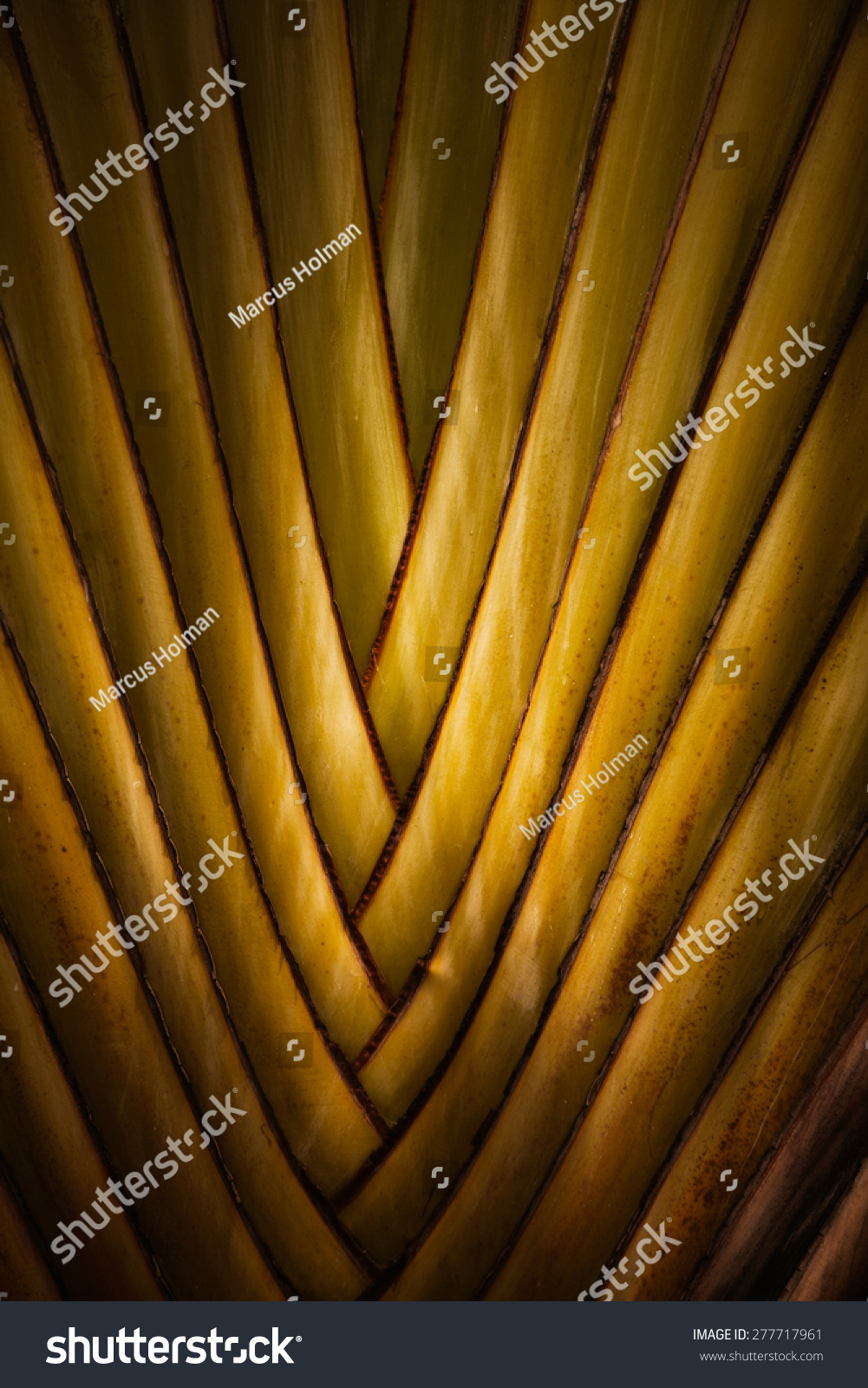 Abstract image of a poorly coiled yellow garden hose.   EZ Canvas