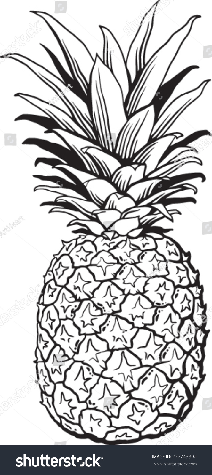 Line Quality In Art : Line drawing of pineapple pixshark images