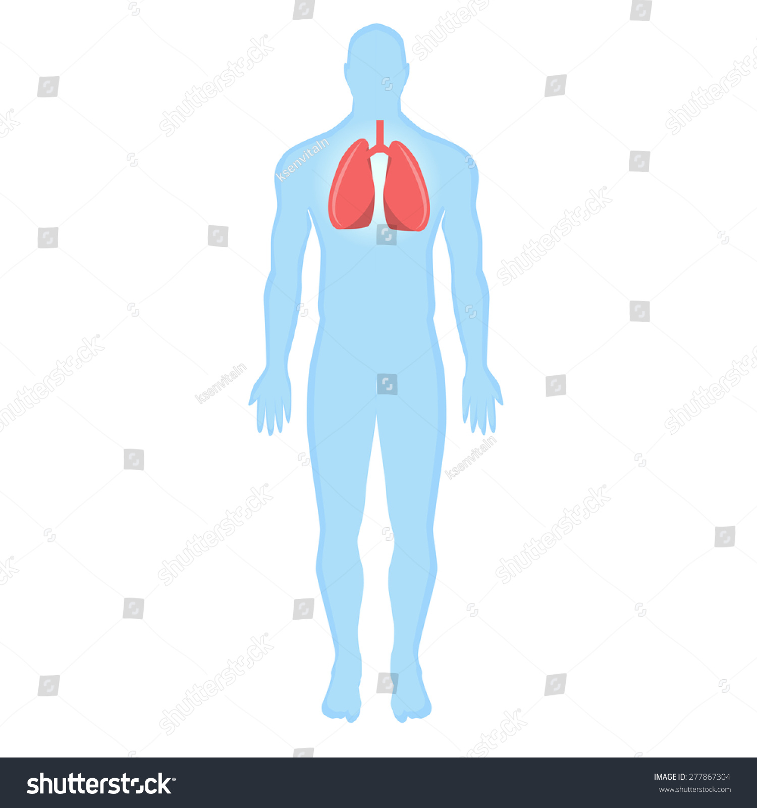Blue Human Silhouette Human Lungs On Stock Vector 277867304 ...