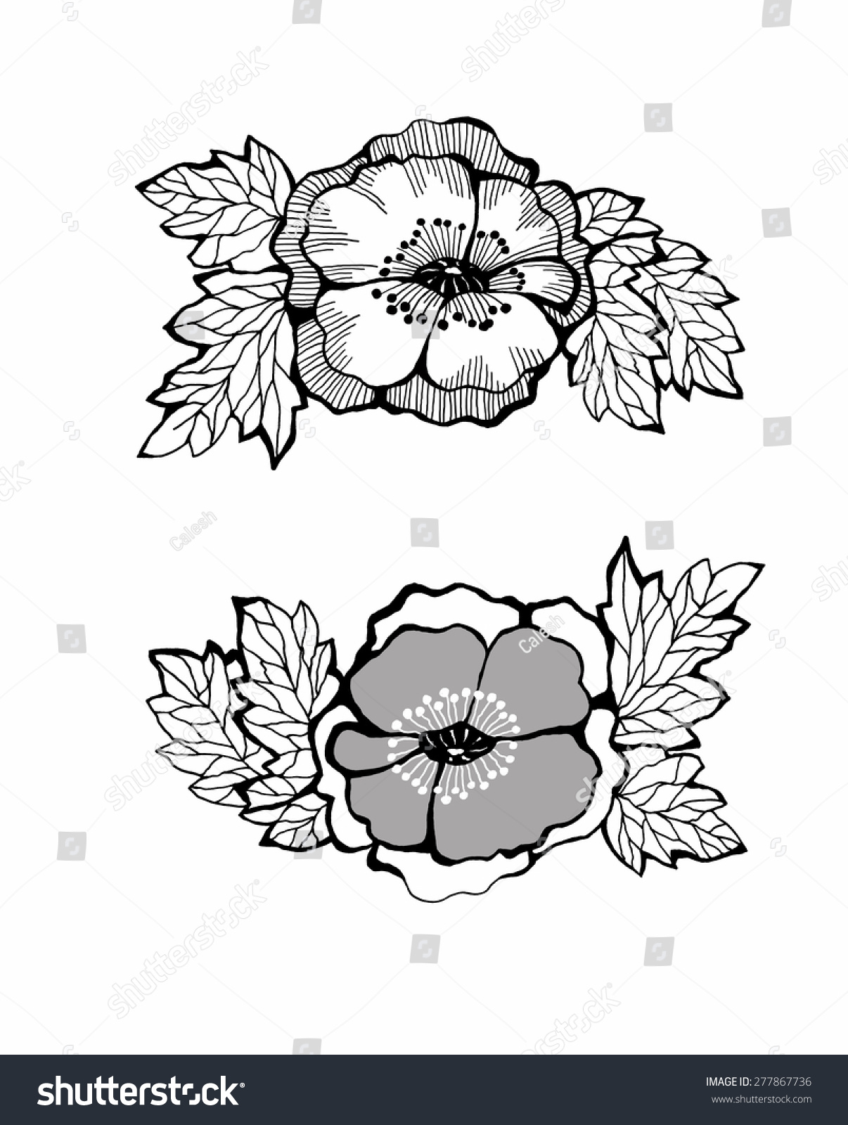 Peony flower isolated on white stock vector 368014568 shutterstock - Flowers Black And White Isolated On White Background Stock Vector