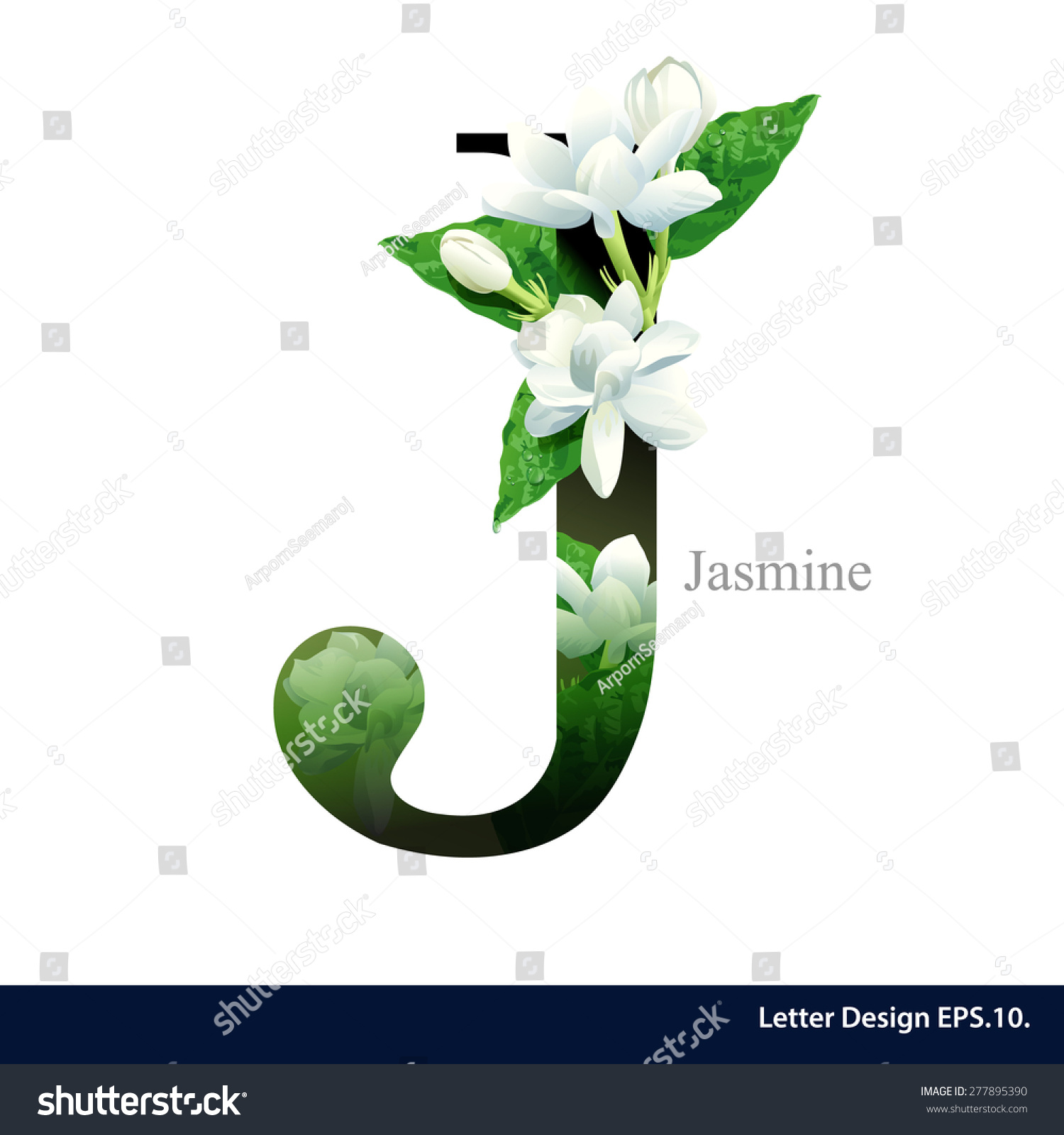 Letter J Vector Alphabet Jasmine Flower Stock Vector Royalty Free
