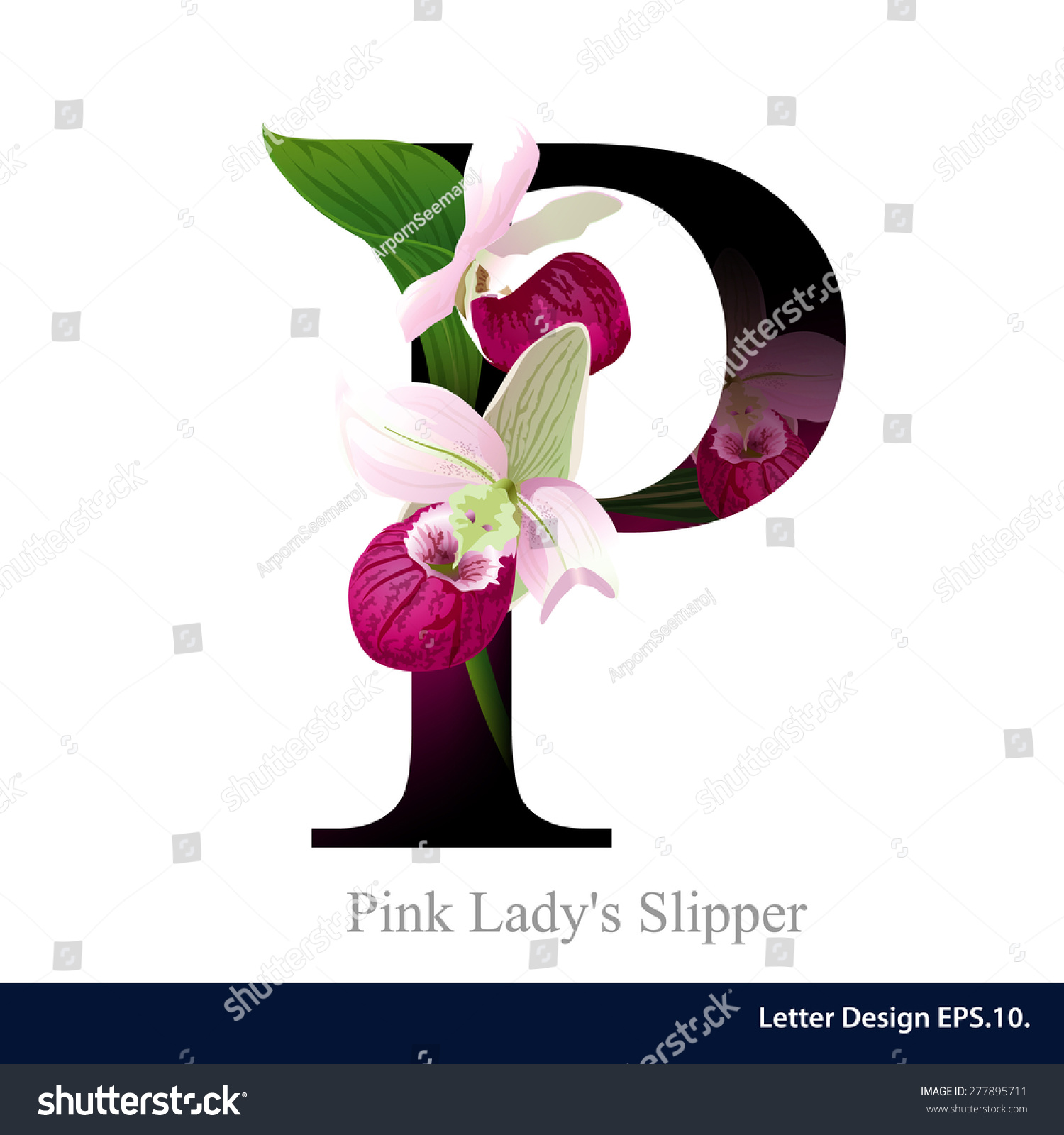 Letter P Vector Alphabet Pink Lady Stock Vector Royalty Free