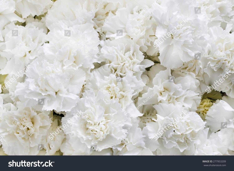 White Carnations Background Ez Canvas