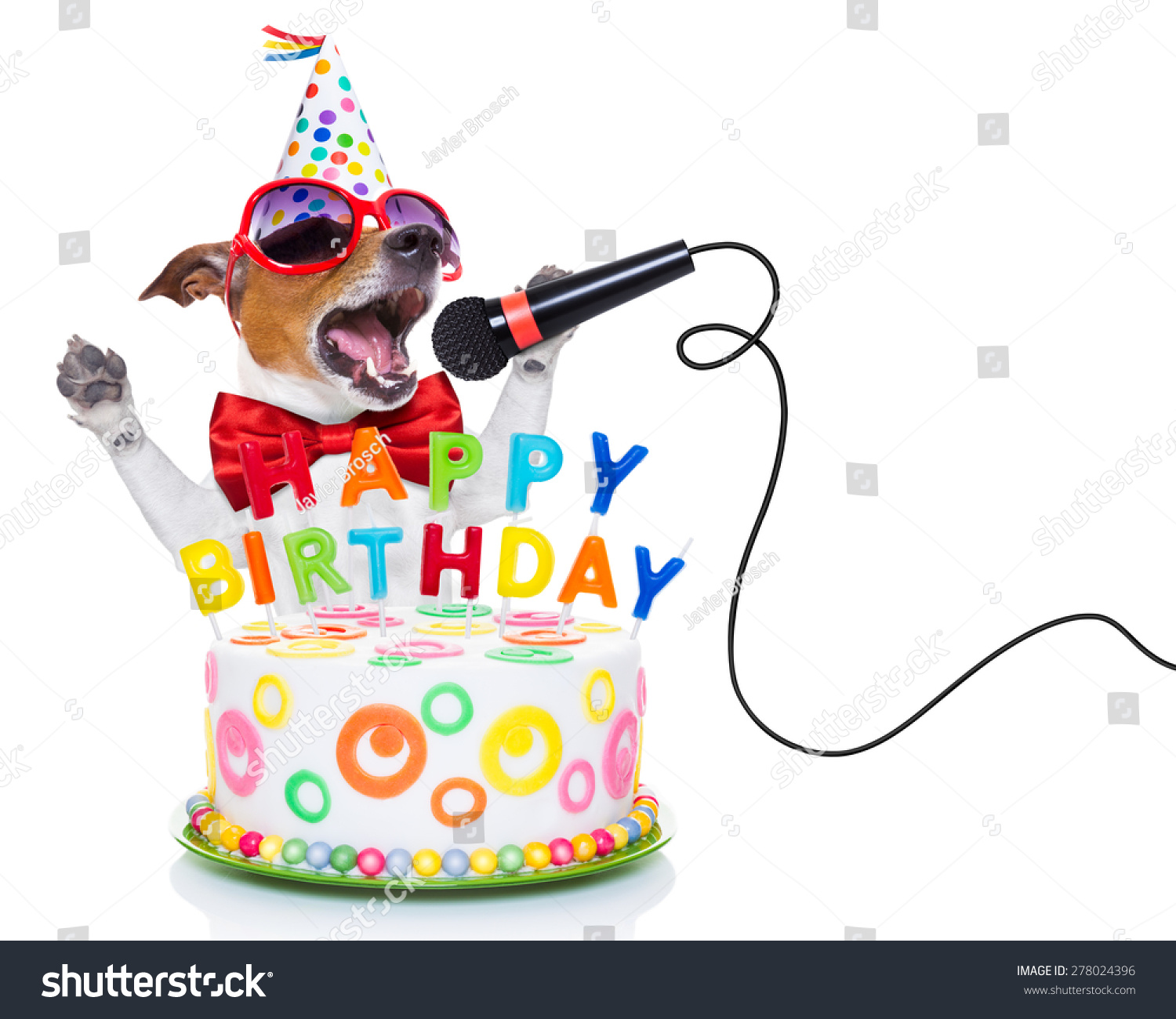 Jack Russell Dog As A Surprise, Singing Birthday Song Like