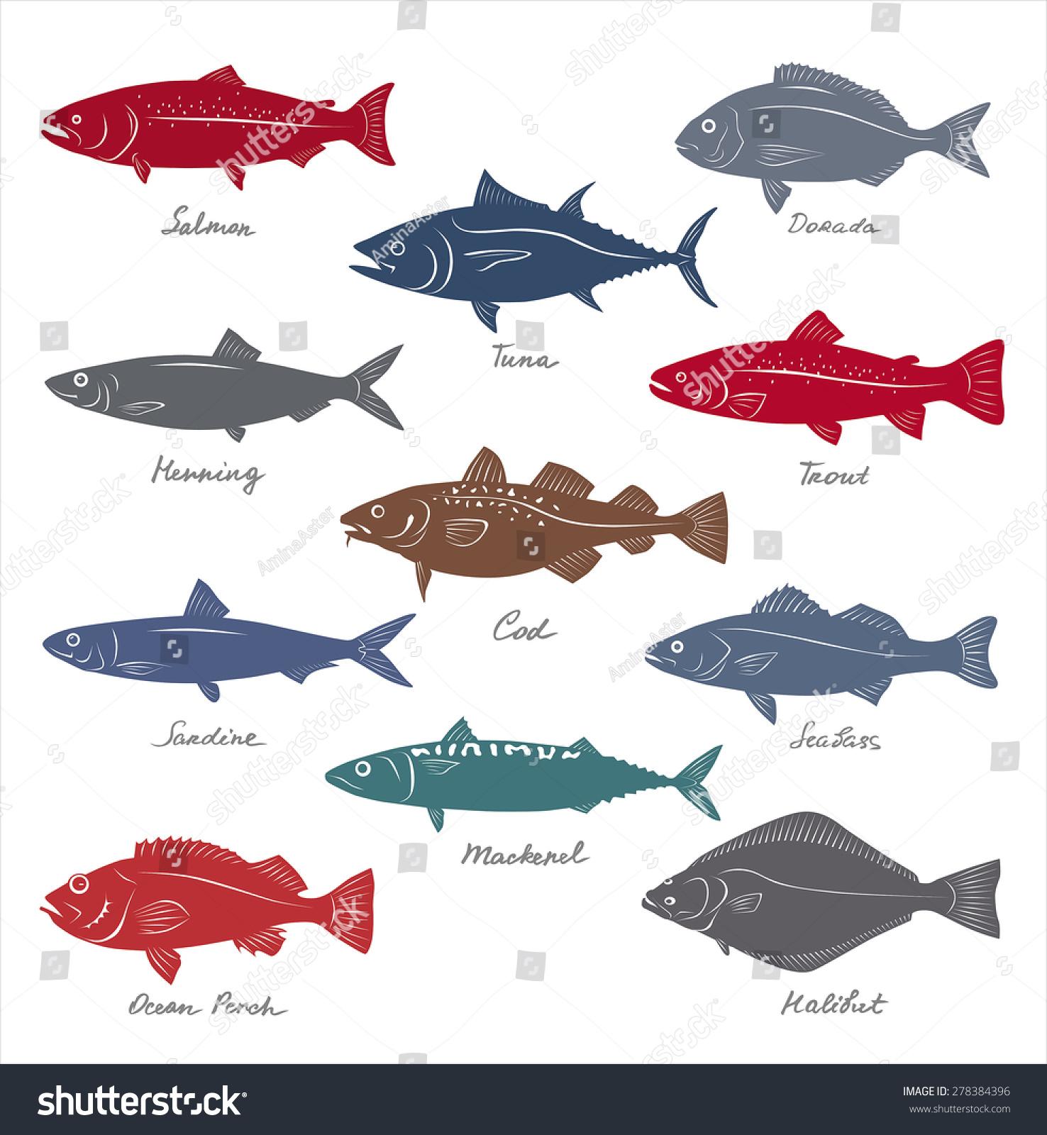Big Collection Marketable Fish Symbols Vector
