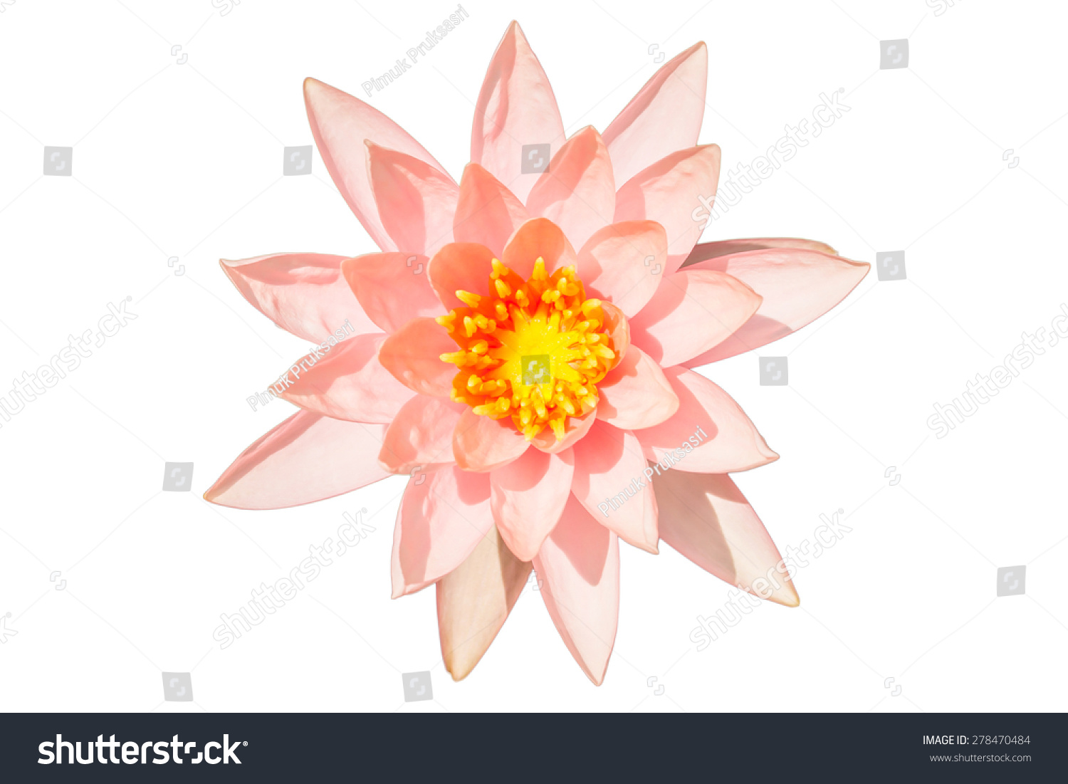 Pink Colour Lotus Flower Stock Photo Edit Now 278470484 Shutterstock