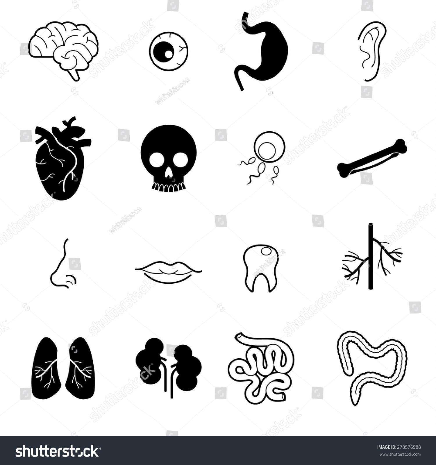 Human Body Parts Organsmedical Health Vector Stock Vector 278576588 ...
