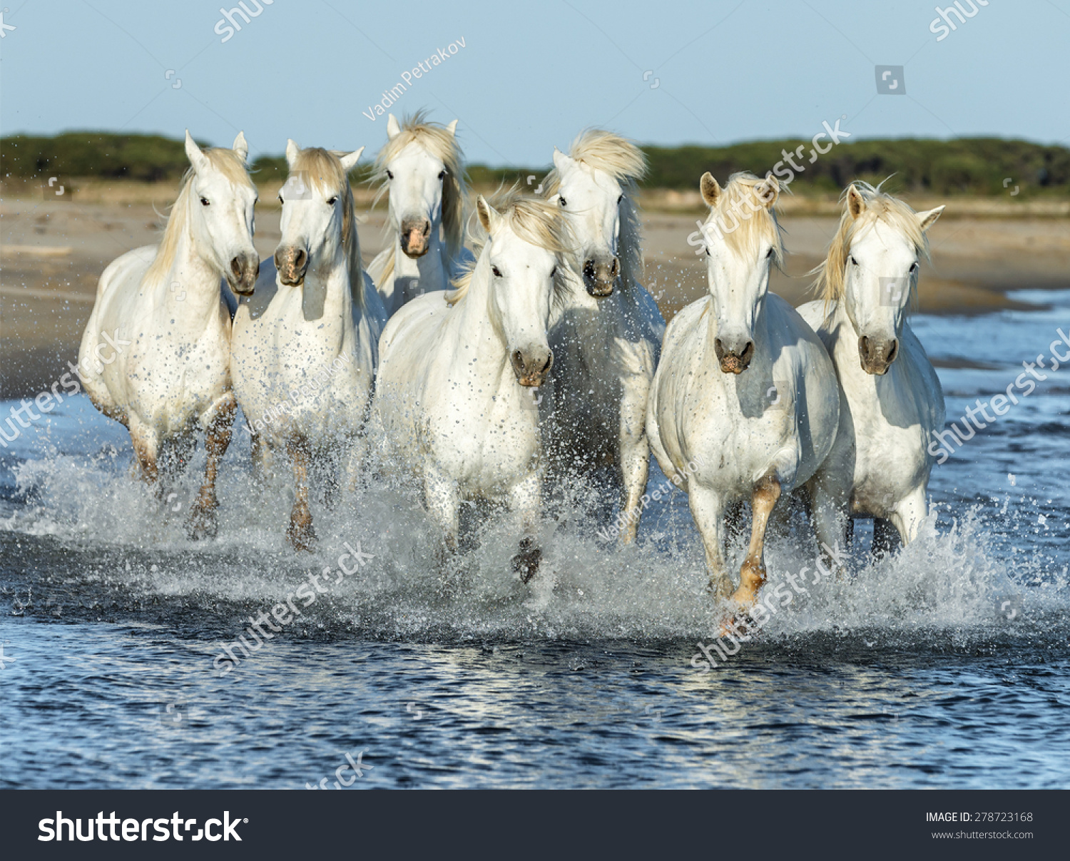 2019 year look- Horses White running on beach pictures