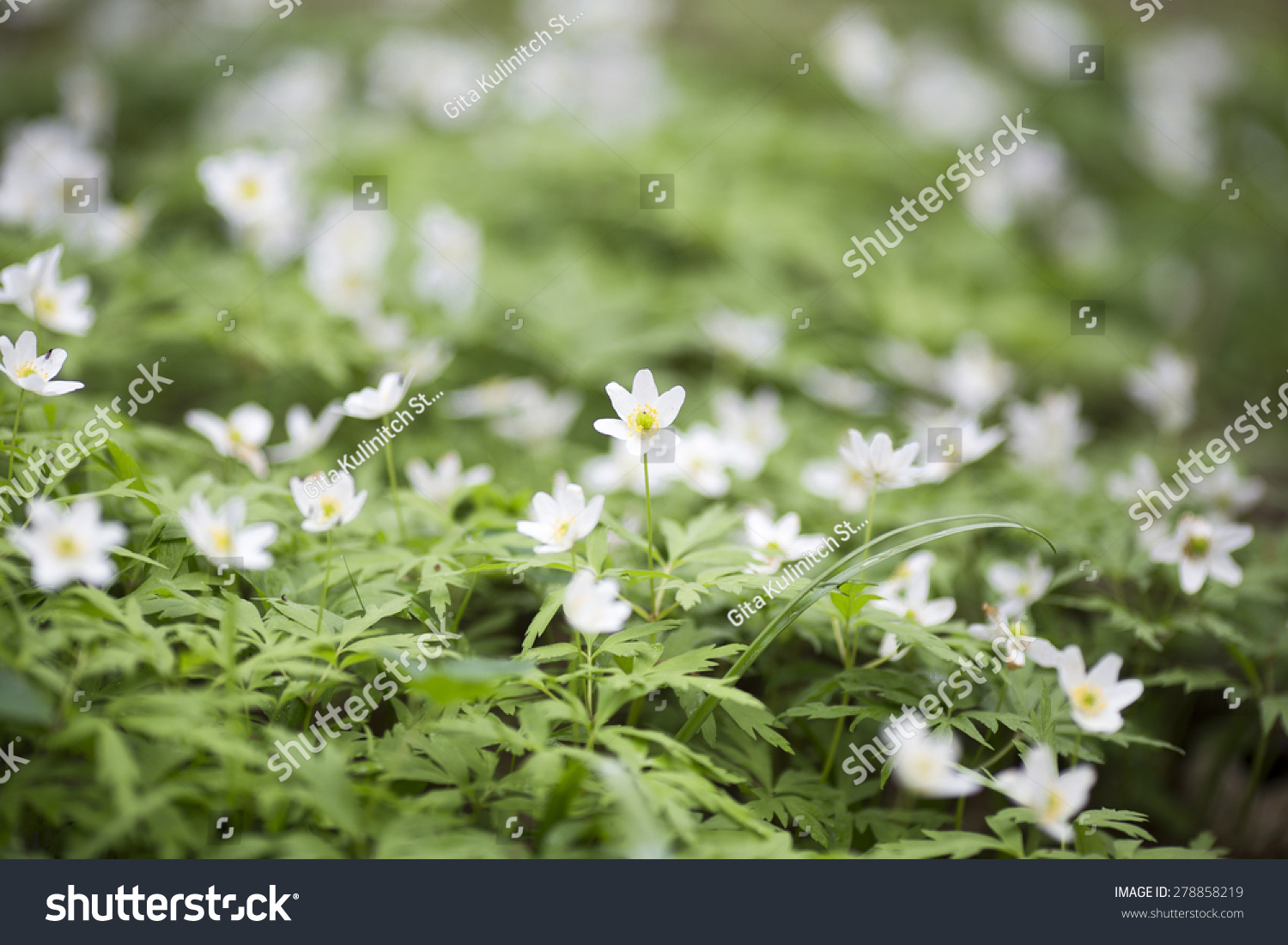 The Flowers Bloom In Spring Beautiful Picture Ez Canvas