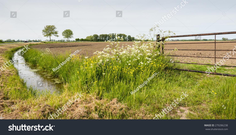 Weeds Stream Deutsch