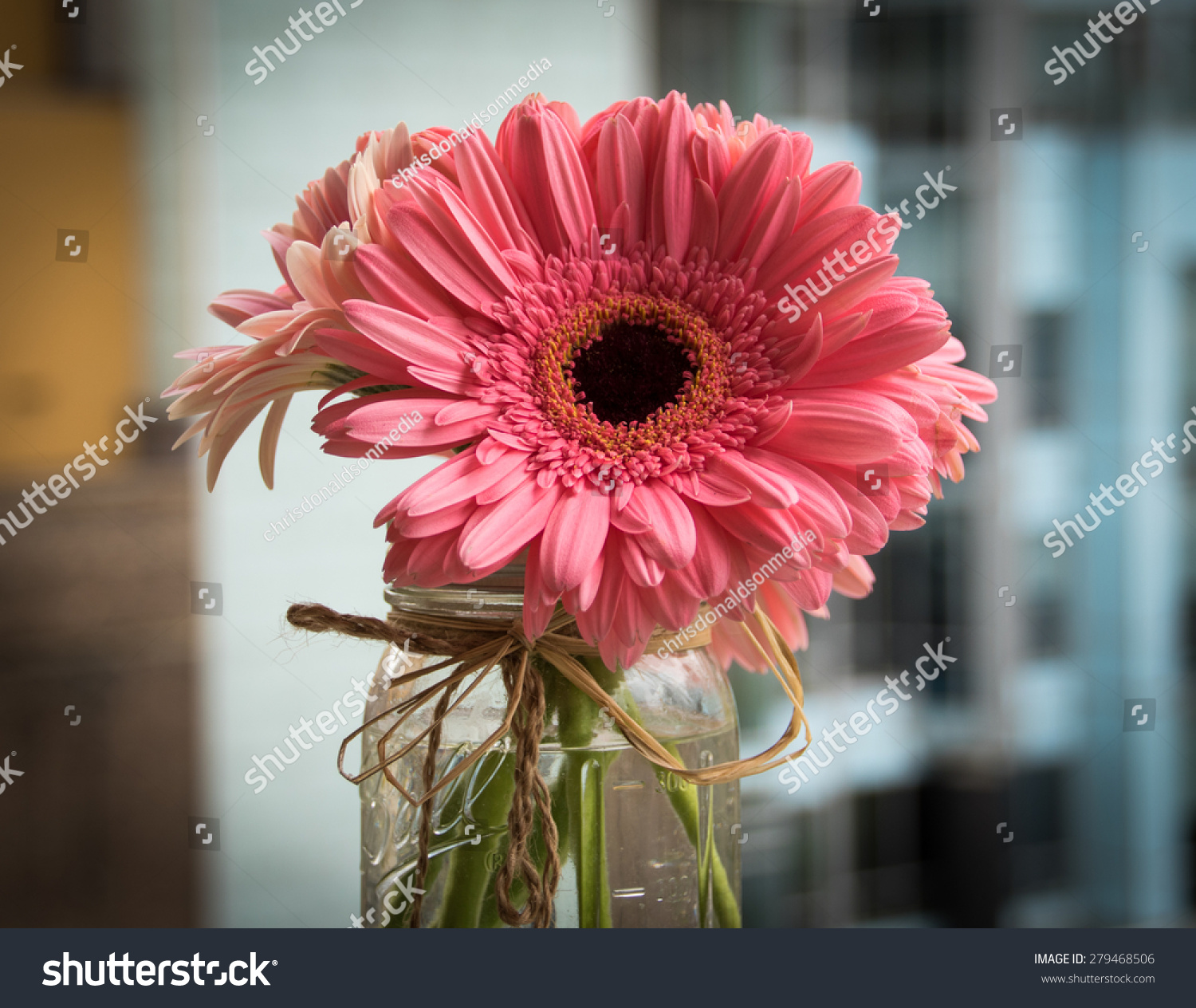 Pink Daisy Flower Mason Jar Stock Photo Edit Now 279468506