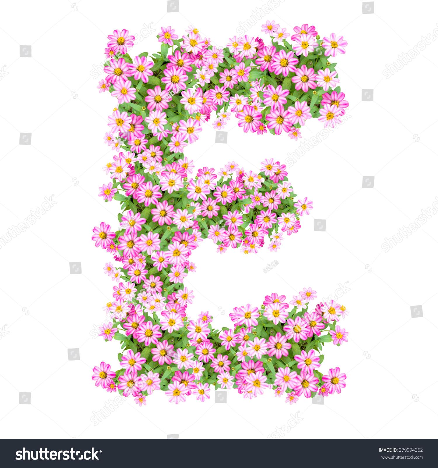 Letter E Alphabet Zinnia Flower Abc Stock Shutterstock