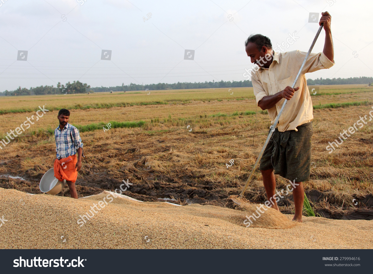 Alleppey India  city photo : ALLEPPEY, INDIA APR 03 : Unidentified farmers engage in the post ...