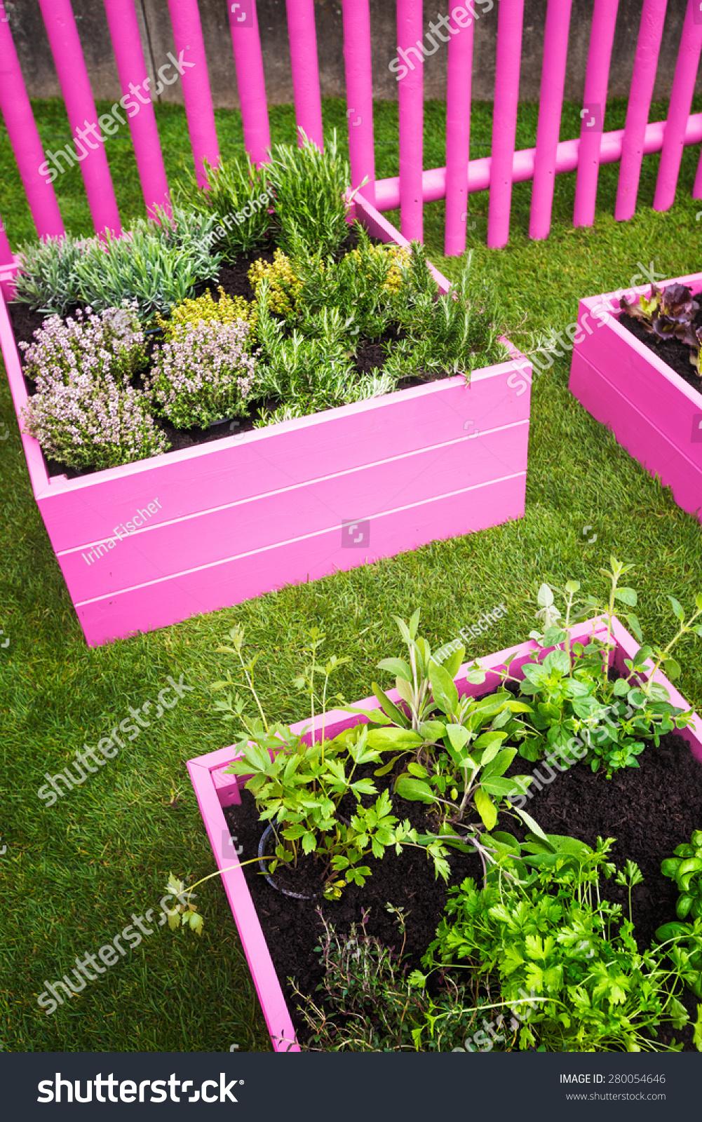 Herb Garden Pink Raised Beds Herbs Stock Photo Edit Now 280054646