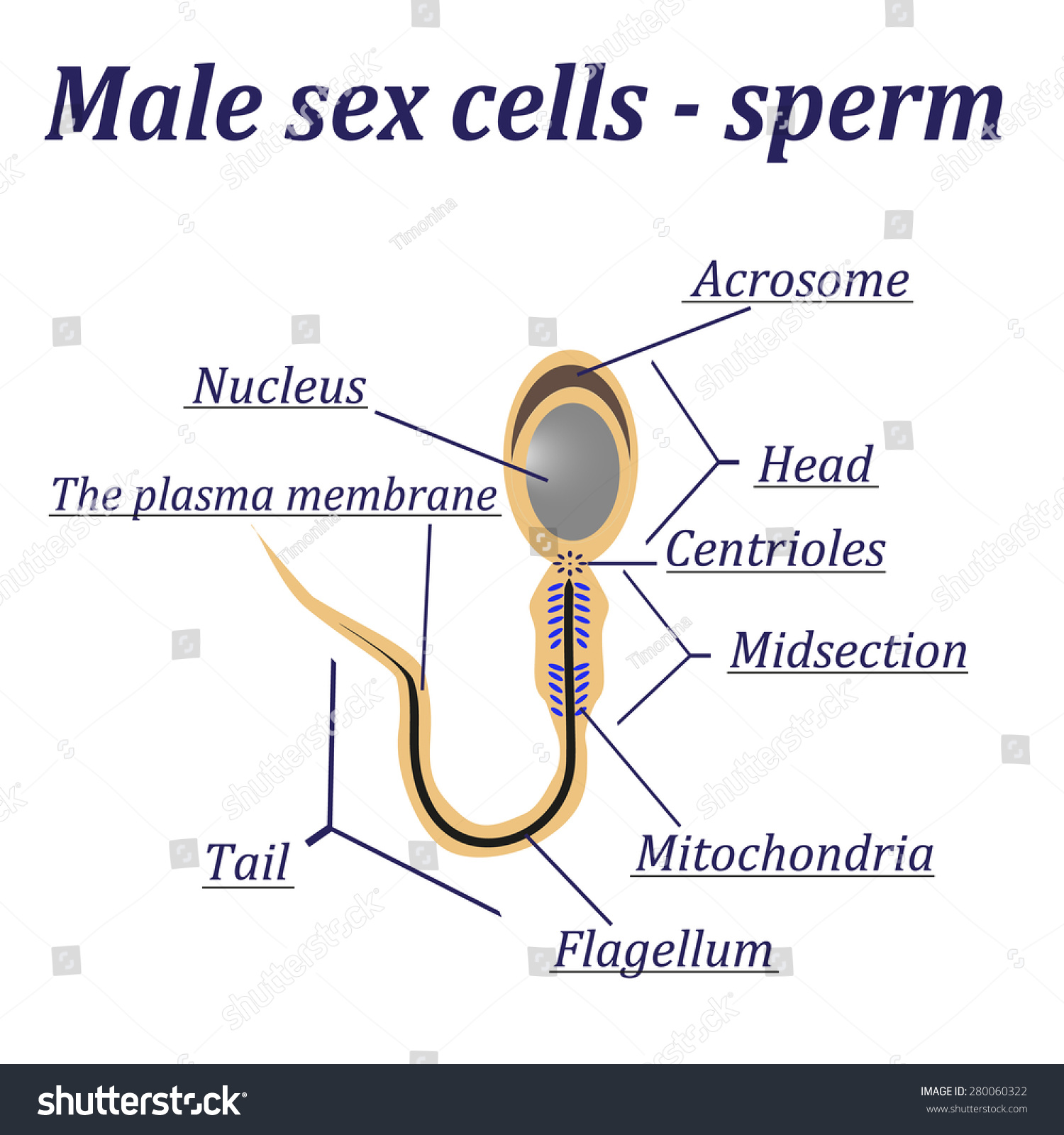 Vitamins for low sperm count