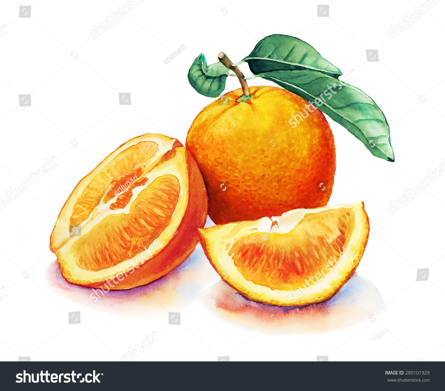 Watercolor Drawing Orange Fruits On White Stock Illustration ... for Drawing Orange Fruit  289ifm