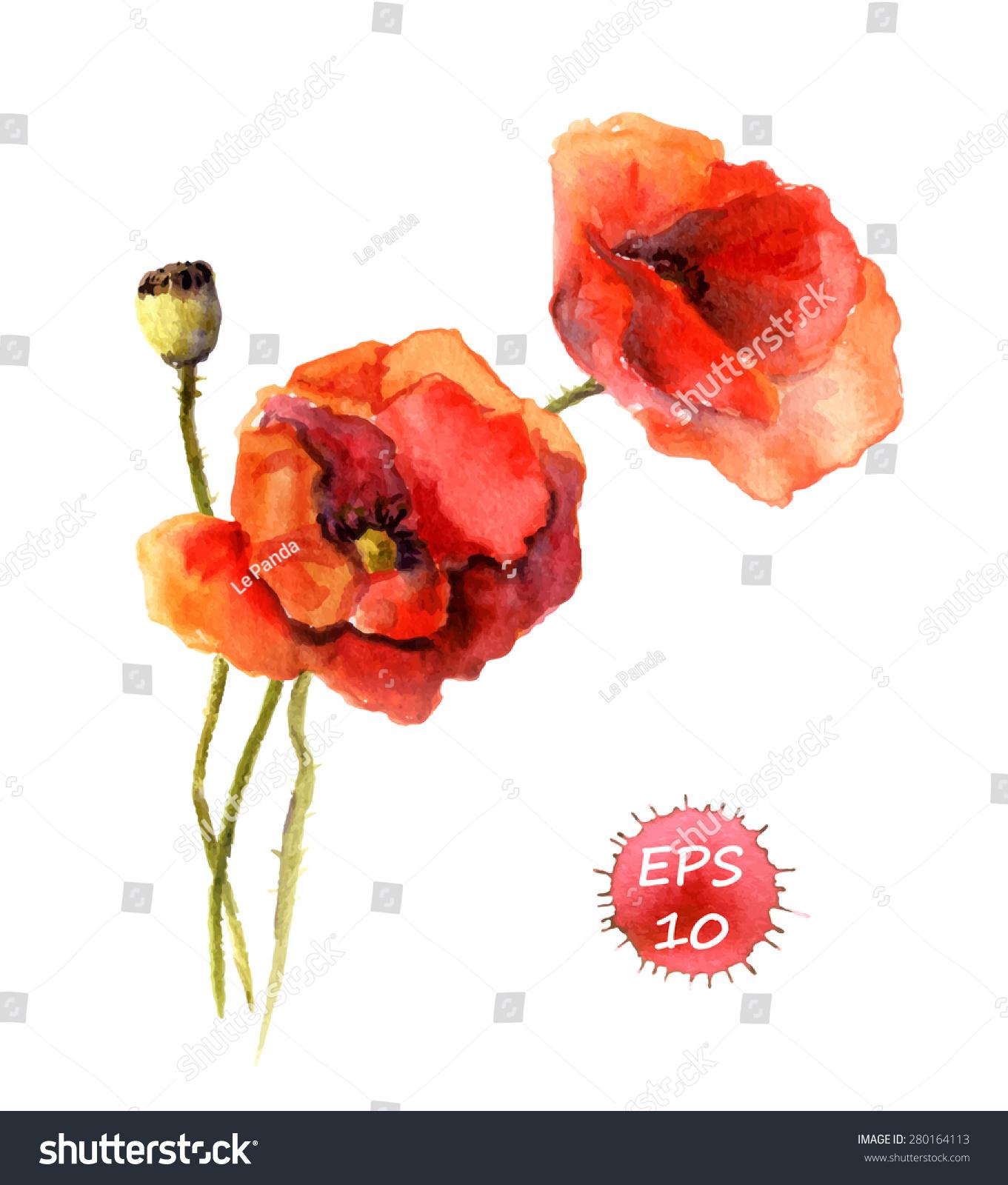 Poppy Flower Watercolor Vector Vintage Botanical Stock Vector
