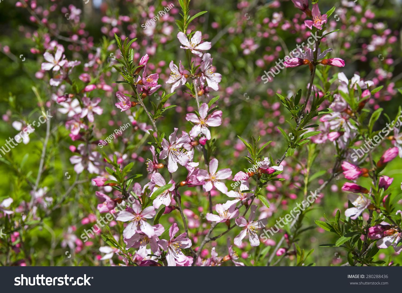 Flowering Bush Ez Canvas