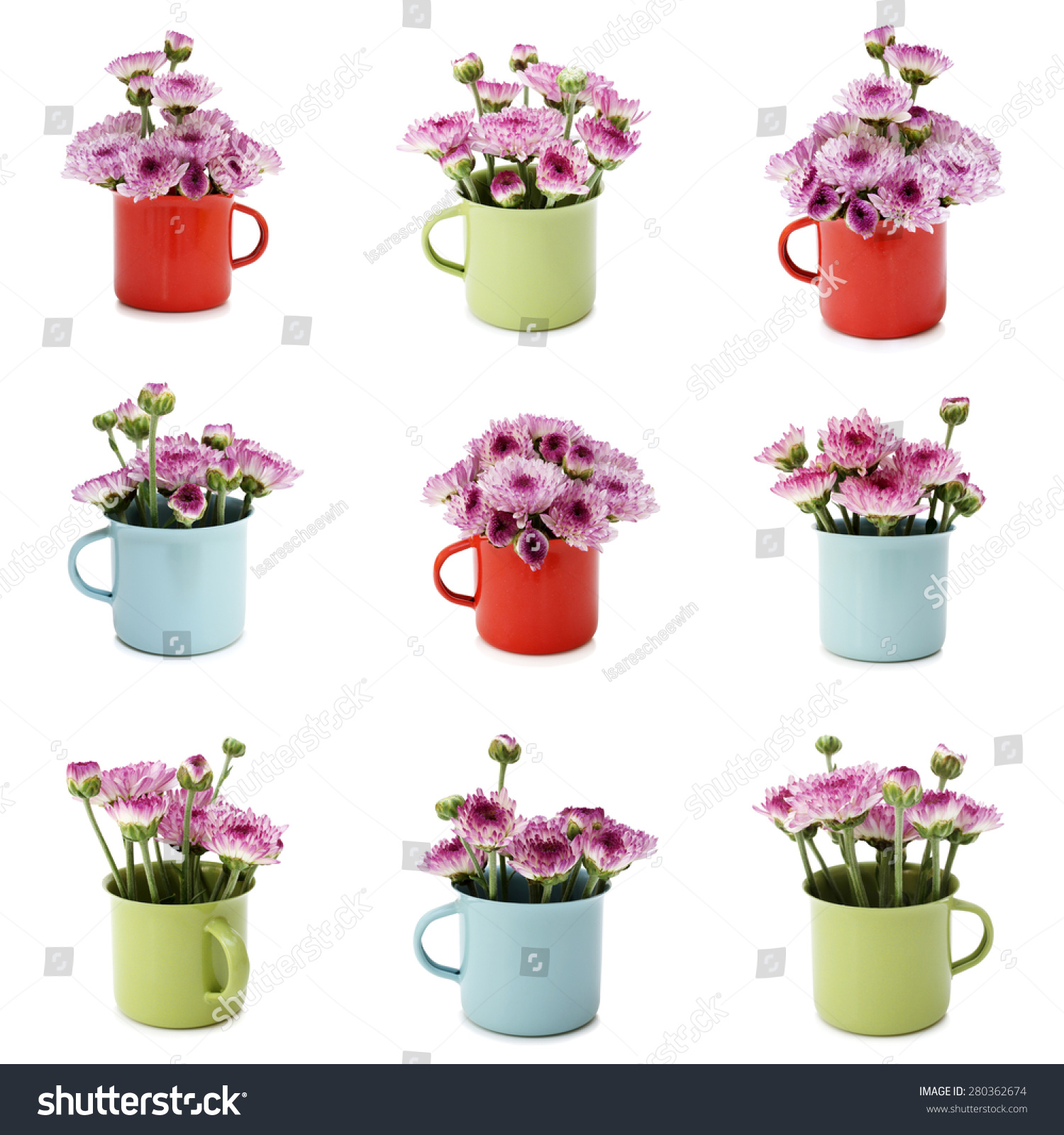 Spring Purple Flower Small Various Colors Stock Photo