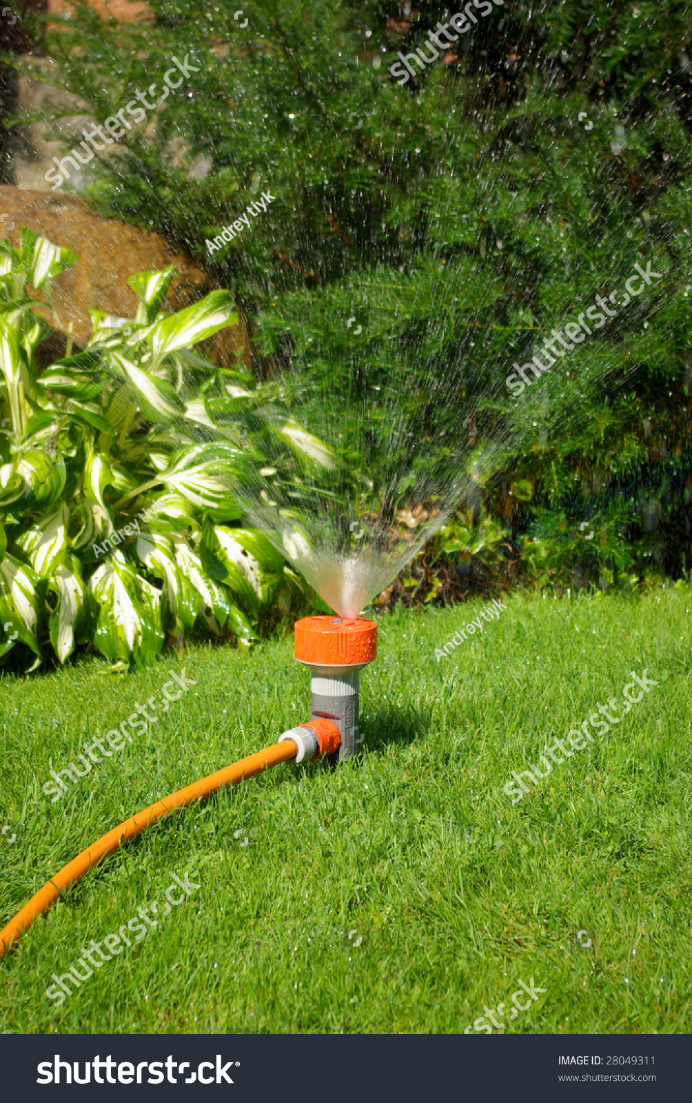 Backyard Garden Irrigation : Yellow sprinkler watering the backyard garden stock photo