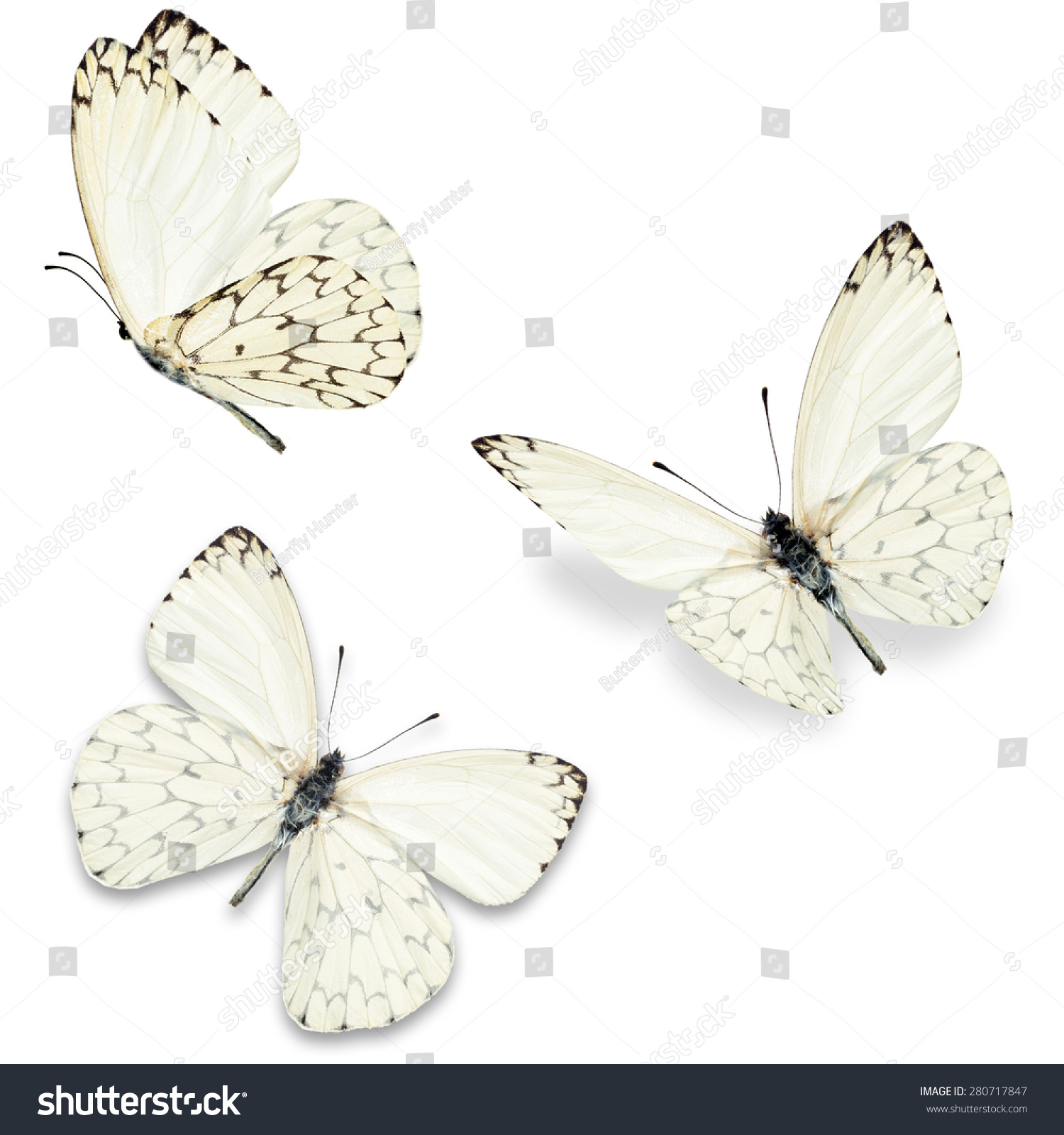 Three White Butterfly Isolated On White Stock Photo ...