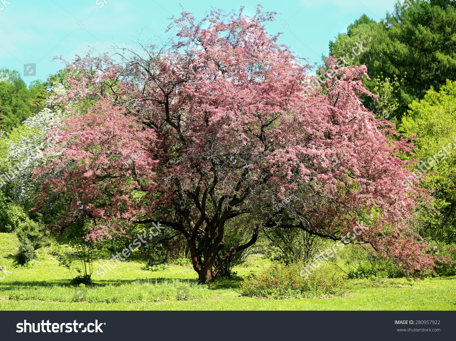 Rural Churchyard Trees In Colorful Springtime Blossom Ez Canvas