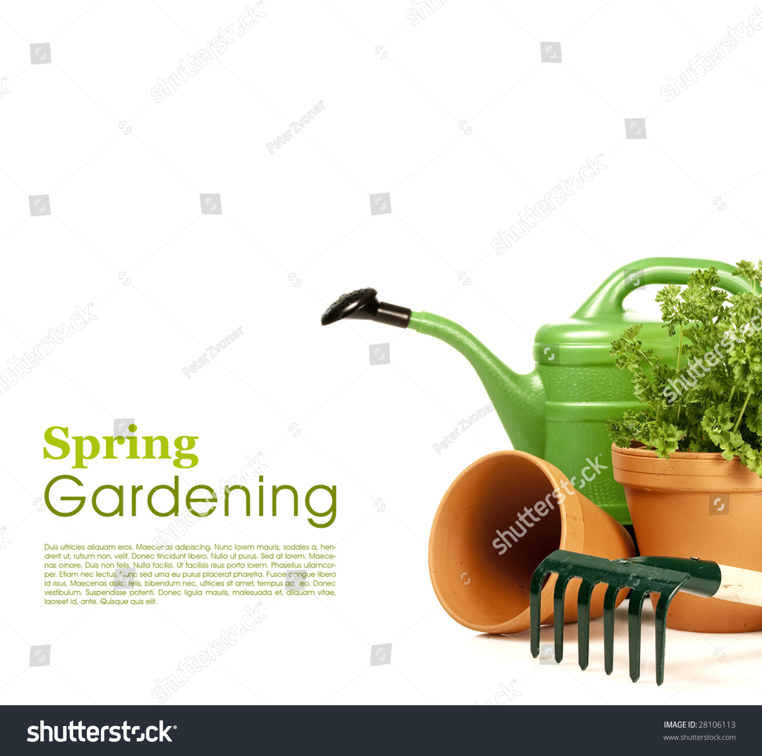 Watering can and garden tools on white stock photo for Gardening tools watering