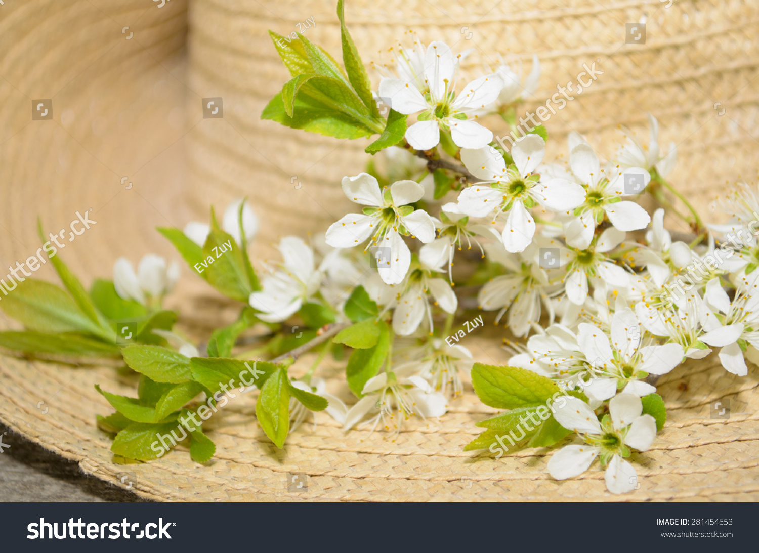 branches of blooming trees on a background of straw hat #281454653
