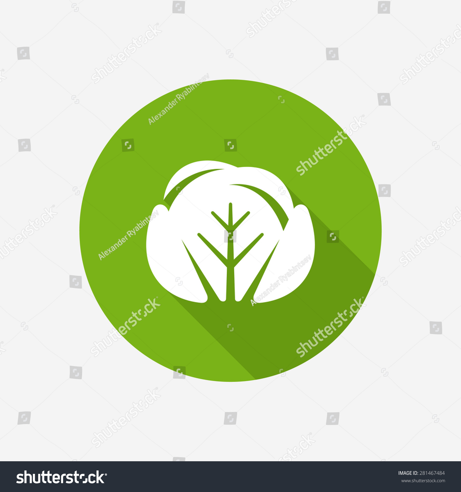 File:cabbage-iconpng