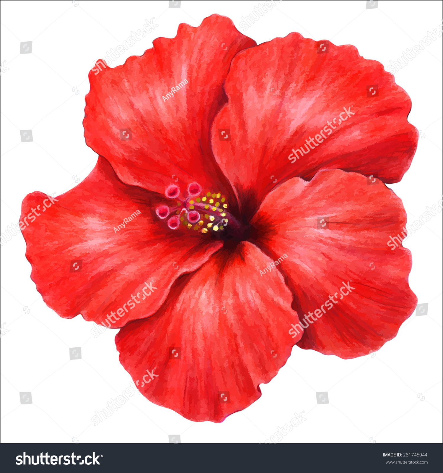 Colored Pencils Hand Drawing Beautiful Hibiscus Stock Vector