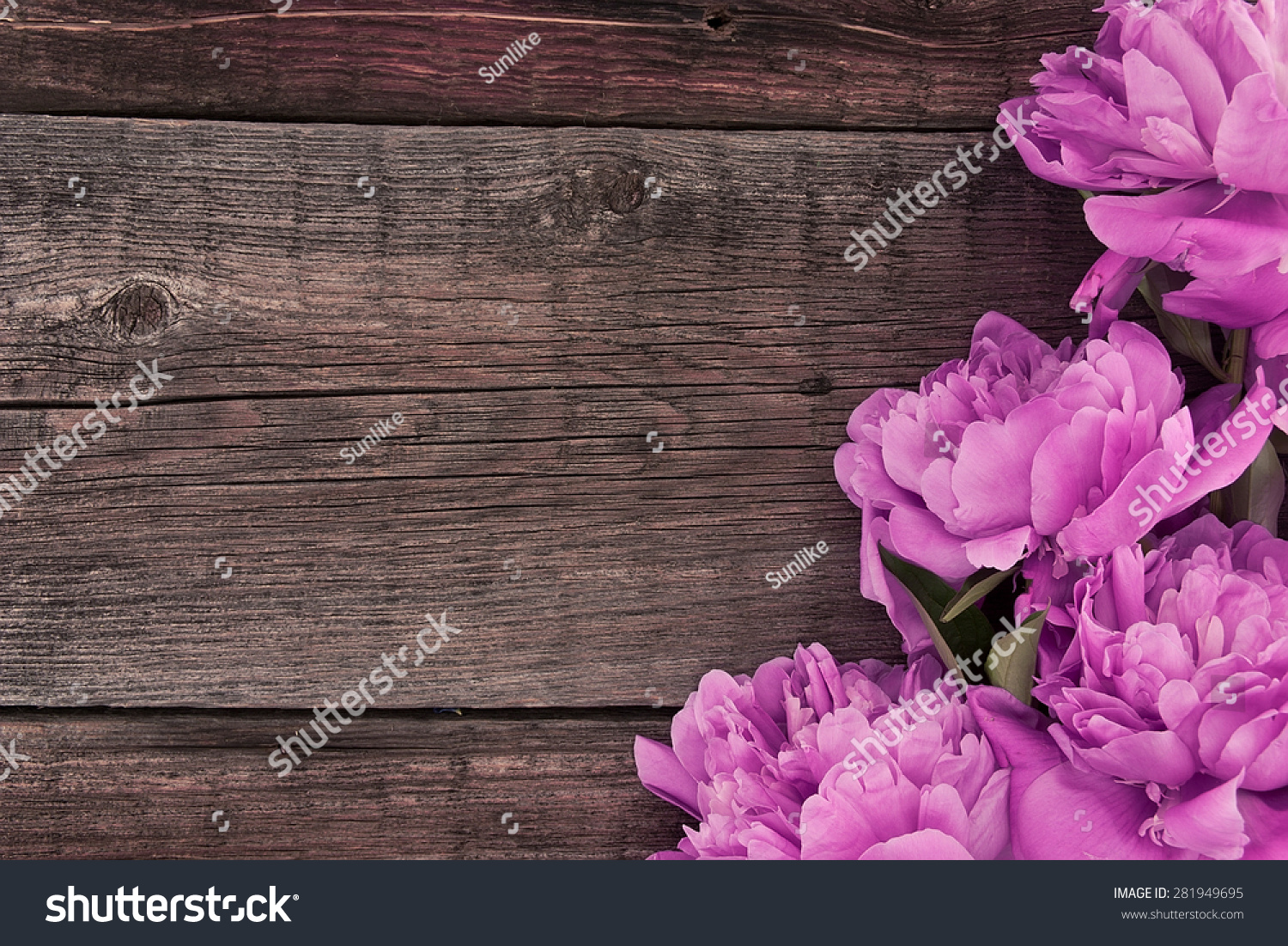 Pink Flowers Roses On Rustic Wooden Background With Copy Space For