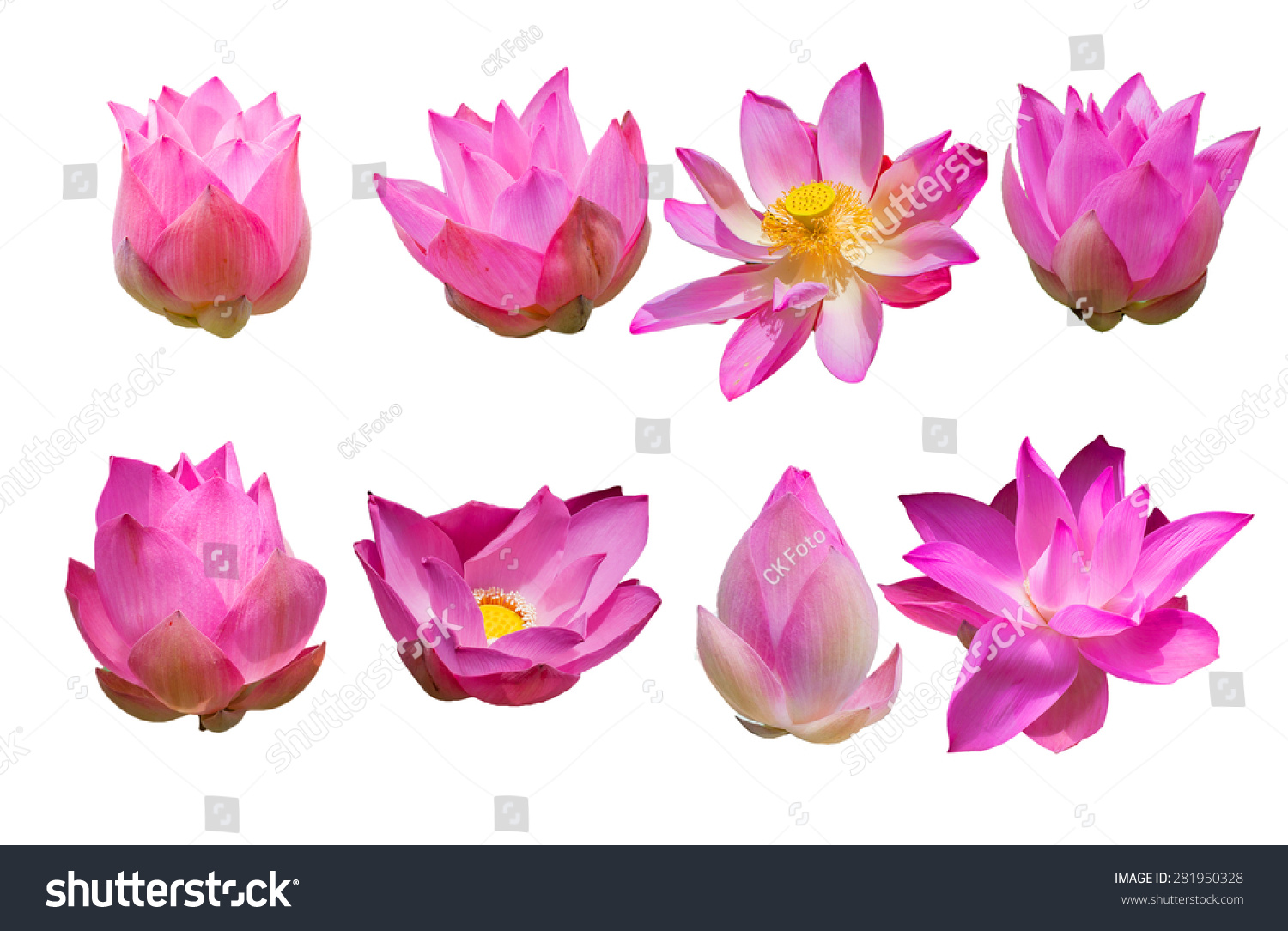 beautiful pink lotus flower isolated on stock photo, Beautiful flower