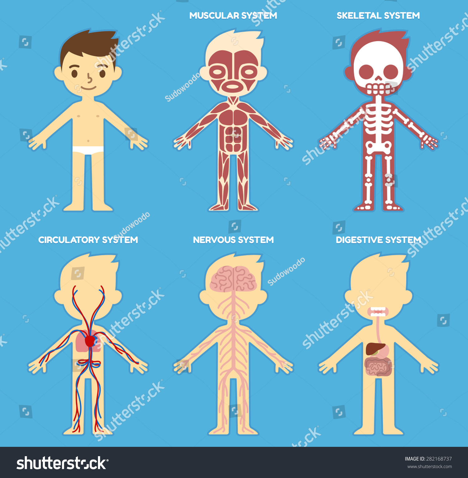 My Body Educational Anatomy Body Organ Stock Vector ...