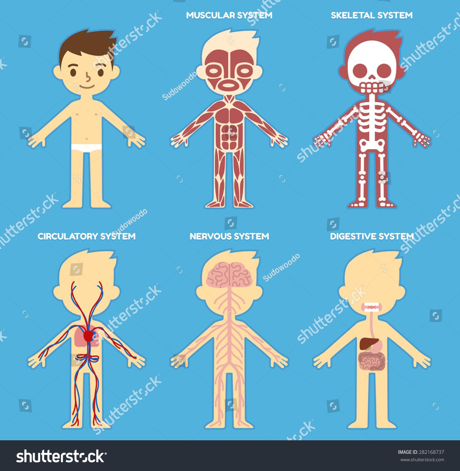 Heart anatomy poster