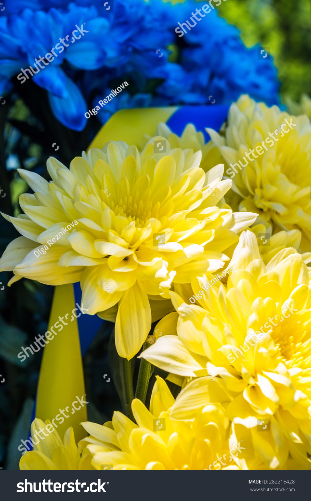 Close up view on yellow and blue flowers with strip ez canvas id 282216428 izmirmasajfo