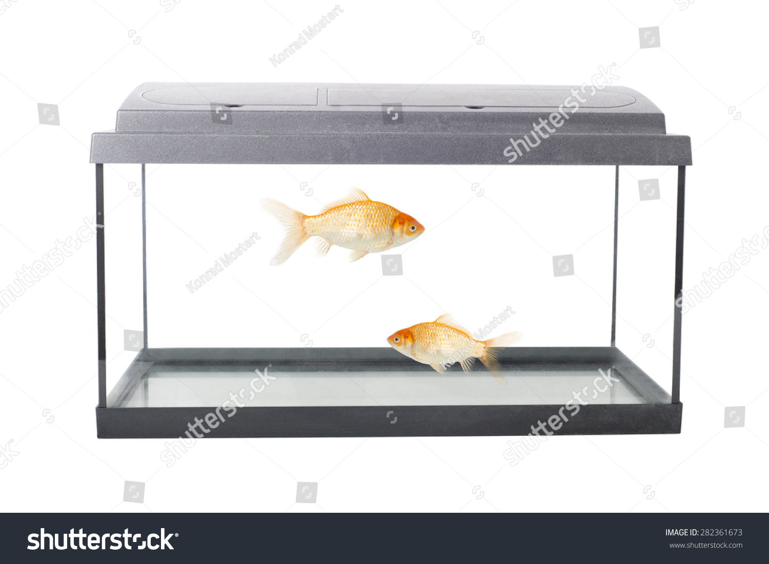 Isolated empty fish tank clipping path stock photo for Fish stock tank