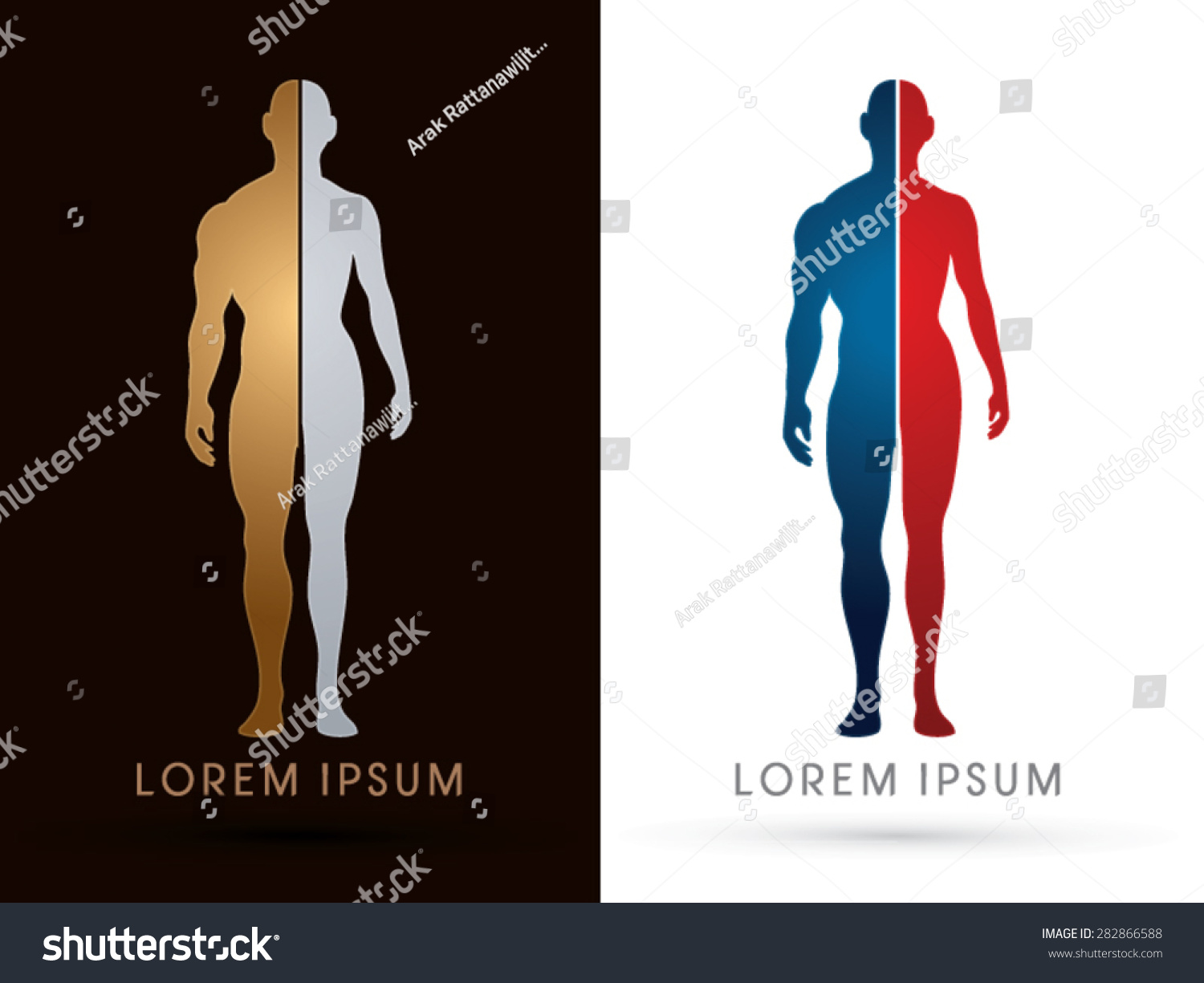Silhouette Half Body Male Female Anatomy Stock Vector (Royalty Free ...