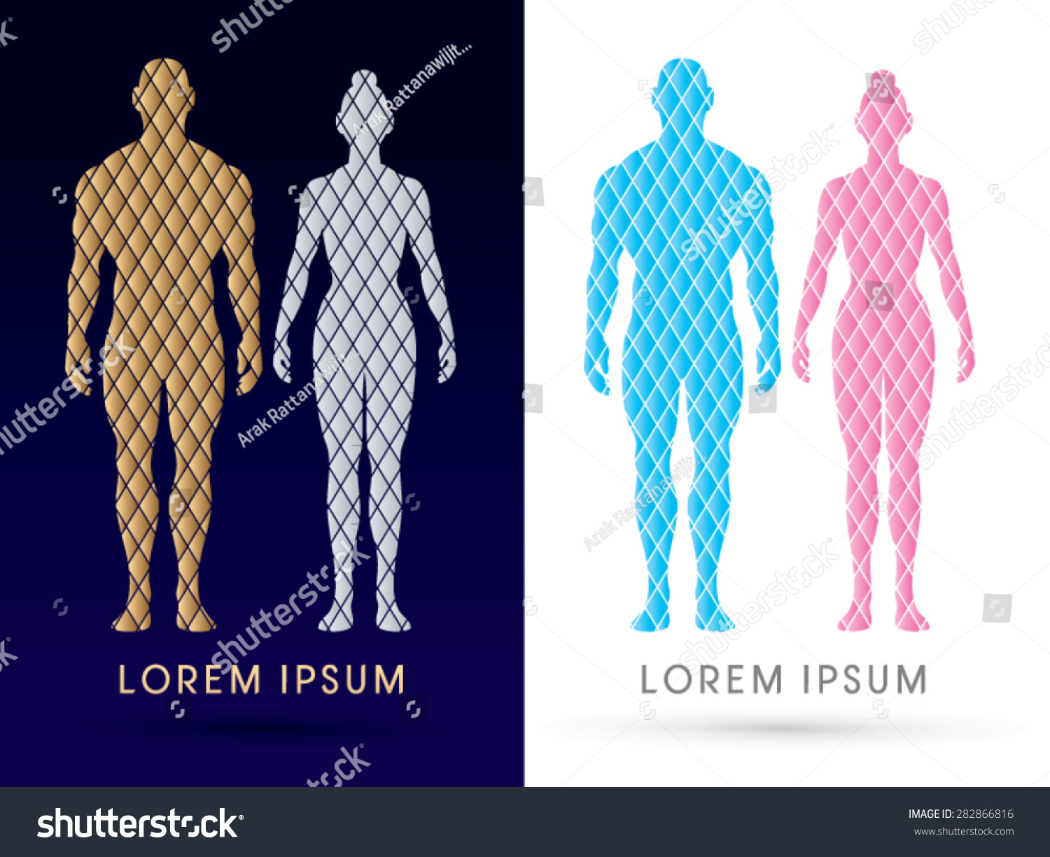 Male Female Anatomy Human Body Full Stock Vector (Royalty Free ...