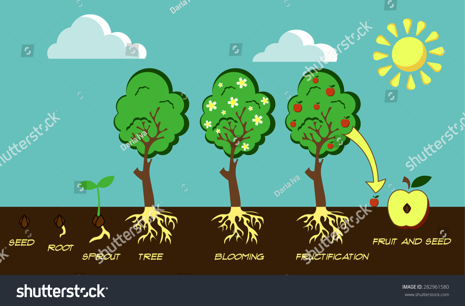 demonstration about circle of life of apple tree How does an apple seed turn into an apple tree the apple seed is found within  the fruit of the tree what is the fruit well, the apple of course the apple will fall.