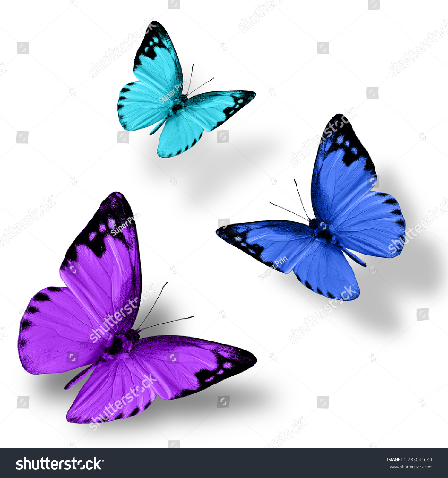 Beautiful Flying Purple Blue Green Butterfly Foto de stock (libre de ...